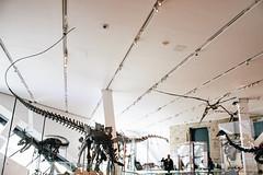 Jurassic Park - Sauropoda (Mallika Makkar Photography) Tags: toronto canada history museum canon fossil rebel university dinosaur reptile wideangle science bones bone biology paleo rom palaeontology yyz uoft 18mm fossilized sauropod 416 pterosaur torontophotographer torontophotography