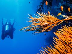 IMG_0320 (eye[4]eye) Tags: egypt diving gypten tauchen bluewaves