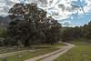 The way (svg74) Tags: españa naturaleza tree nature landscape andalucía spain paisaje árbol costadelsol andalusia málaga holm holmoak encina