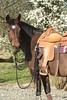 Rancho Groblice (agnieszka.rumiska) Tags: horse western halter awn
