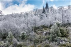 Nature's Poetry (FiddleFlix) Tags: morning usa snow mountains northcarolina blueridgeparkway mtpisgah
