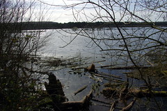25.3.16 Delamere Forest 45 (donald judge) Tags: trees water forest countryside cheshire mere delamere