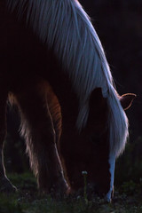 Horse (jackdean3) Tags: horse animal silhouette jack farm kentucky dean grazing