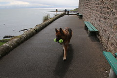 2016 - 26.4.16 Crail (16) (marie137) Tags: road new bridge sea sky beach dogs animals st landscape boats town sand crossing village harbour forth queensferry crail monans geman