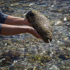 Black sea cucumber (NettyA) Tags: australia nsw lowtide day5 unescoworldheritage seacreatures seacucumber rockpools lordhoweisland 2016 lhi reefwalk rockplatform nedsbeach blackseacucumber holothurialeucospilota lordhoweforclimate