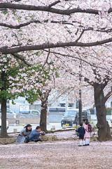 20160409-DSC_6842.jpg (d3_plus) Tags: street sea sky plant flower nature bicycle japan cycling nikon scenery outdoor daily bloom  cherryblossom  sakura streetphoto 28105mmf3545d nikkor   kanagawa    dailyphoto   kawasaki thesedays pottering    28105     28105mm   zoomlense    28105mmf3545  d700 281053545 kanagawapref  nikond700 aiafzoomnikkor28105mmf3545d  28105mmf3545af aiafnikkor28105mmf3545d