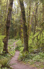 101/366_04_10 FRAMING_Forest Park (Jodi J.M.) Tags: forest portland forestpark day101366 366the2016edition 3662016 10apr16