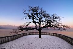 Waiting for Spring - re-edit 2016 (Jacopo.Colombo) Tags: italy tree canon lago italia tokina lagomaggiore waitingforspring stresa 1116 60d canoneos60d tokinaaf1116mmf28 atx116prodx tokinaatx116prodxf281116mm wwwjacopocolombocom