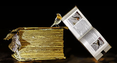 Old school (kunstschieter) Tags: bird robin book boek vogel roodborst