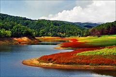 Lake Bor (Katarina 2353) Tags: summer mountain lake film nature field landscape nikon europe serbia bor srbija katarinastefanovic katarina2353