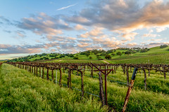 Vineyards, King City, California (Rod Heywood) Tags: sunset grass clouds spring wine hills vineyards montereycounty oaks kingcity greenhills jolon
