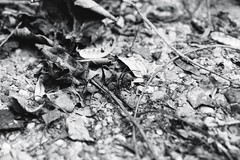 Irgendwo (Maddes91) Tags: white black macro analog nikon natur 55mm micro heidelberg nikkor weiss garten schwarz schriesheim ais f90x weinberge dossenheim manuell