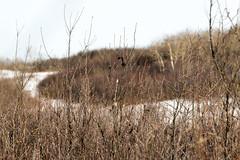 Buds waiting for spring - Beaver Creek (Jim 03) Tags: grass creek river centre conservation jim beaver valley short 1984 area prairie saskatchewan meewasin 1979 sites microcosm interpretive uncultivated jimhoffman jhoffman jim03 wwwflickrcomphotosjhoffman2013 wwwjimahoffmancom