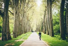A Spring Day (freyavev) Tags: road street trees green germany deutschland 50mm spring alley stuttgart outdoor schlossgarten badenwürttemberg vsco