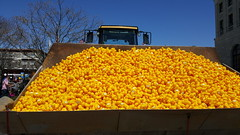 20,000 rubber ducks ([soksa]icy) Tags: ducks rubberducks pawcatuckriverduckrace