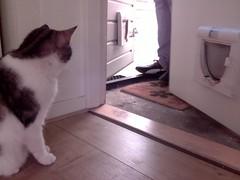 20160501-111651-i-1 (Catflap central) Tags: camera pet cats cat pi raspberry meow catdoor catflap kattenluik katzenklappe catflapj2nnl