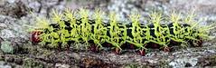 DSC03919.jpg (Eduardo Mena U.) Tags: gusano ujarrs