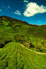 l Tea Farm - Part 1 l (Hafiz.Soyuz.Photography) Tags: sky mountain green nature clouds landscapes village tea farm visit fields pahang boh cameronhighland sgpalas