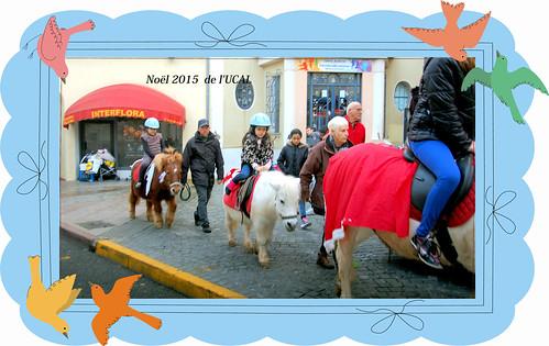 Manège & poneys (8)