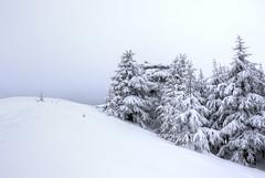 Forest Edge. (jrseikaly) Tags: winter lebanon white snow tree nature forest jack photography high dynamic cedar range arz hdr cedars seikaly jrseikaly