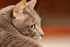 Miaoooooo (Roby90) Tags: cats nikon gatti domestici animali d90