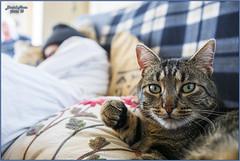 Nap time (Damaz Real Fantasy) Tags: pet animal cat bigotes gato siesta naptime dormir mascota