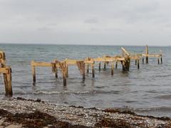 Seaweed drying in the wind (Landanna) Tags: sea seaweed beach nature strand denmark natur natuur zee dnemark danmark als tang denemarken snderjylland zuidjutland kbingsmark zeerwier