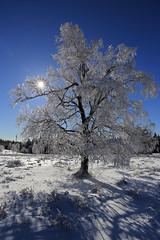 Winter Wonderland (winkler.roger) Tags: winter snow germany landscape blackforest winterlandscape freudenstadt schwarzwaldhochstrasse kniebis