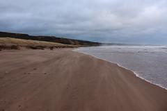 Blowing Sand,Sands of St Cyrus,St Cyrus National Nature Reserve_jan 16_675 (Alan Longmuir.) Tags: aberdeenshire grampian blowingsand stcyrus shiftingsands sandsofstcyrus stcyrusnationalnaturereserve