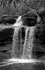 [Nikon F55 Film] (Aviator195) Tags: blackandwhite film nature water monochrome analog 35mm landscape outside outdoors 50mm iso200 waterfall cool interesting flora nikon kodak grain sydney australia scan retro wetlands epson hq woah greyscale filmscan v550 northernbeaches warriewood nikonf55 f55 oldscool warriewoodwetlands ousdie epsonv550 filmphotohraphy hqfilmscan monochrmomatic