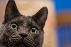 Pooh (wacamerabuff) Tags: cat chat gato neko katze paws  gatto diekatze necko