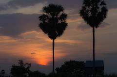 _IGP6066 (narvalnantes) Tags: cambodge tonlsap
