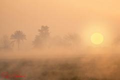 one misty morning (TARIQ HAMEED SULEMANI) Tags: travel winter tree tourism sunrise trekking nikon sensational tariq supershot theunforgettablepictures sulemani tariqhameedsulemani jahanian