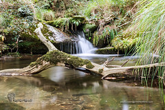 Pequeno paraiso 12 (Felipe Ogando) Tags: naturaleza rios sedas felipeogando morfeofilms
