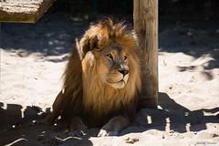 Zoo Palmyre (Jerome Goudal) Tags: canon zoo 5d 70200 f4 mkiii mk3 palmyre 5dmkiii 5dmk3