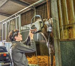 P1290077 (gill4kleuren - 11 ml views) Tags: horses dentist haflinger tandarts 2015 hengst