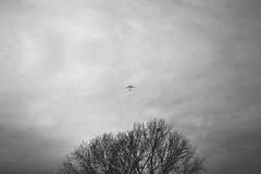 (Luca Grazioli) Tags: life light shadow sky blackandwhite bw italy white black tree contrast plane landscape exposure air bn shade brescia lucagrazioli lucagrazioliphotography lucagrazioliphotos