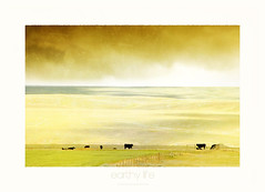 earthy life (au contact de la terre) (patrice ouellet - OFF) Tags: earthy prairies plaine westcanada pturages praierie patricephotographiste earthylife