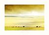 earthy life (au contact de la terre) (PATRICE OUELLET) Tags: earthy prairies plaine westcanada pâturages praierie patricephotographiste earthylife
