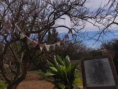 country life (maximorgana) Tags: blue tree green blackwhite country picture dry maceta groung maceton inthecountry banderilla bandeirinhaoh atjuanas