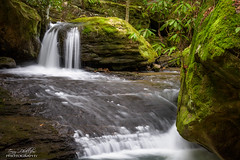 Honey Creek Trail (Tony Phillips Photography) Tags: winter nature water landscape outdoors waterfall scenery hiking tennessee cascade bigsouthfork honeycreeklooptrail