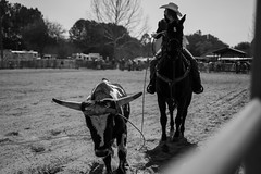 Little kids rodeo (Max Bousrouil) Tags: horse usa girl cow blackwhite florida rodeo cowgirl
