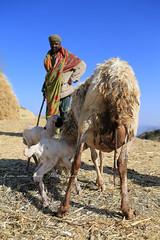 A boire...........Sur la route de Gondar (jmboyer) Tags: eth0933 nationalgeographic lonely gettyimages nationalgeographie tourism lonelyplanet canoneos ©jmboyer canon photo travel voyage géo yahoo flickr afriquedelest eastafrica ethiopianwoman imagesgoogle googleimage impressedbeauty viajes photogéo photoflickr photosgoogleearth photosflickr photosyahoo canonfrance picture photography 7d portrait face visage ethiopie ethiopia afrique africa etiopija googlephotos retrato photos photoyahoo ኢትዮጵያ አፍሪቃ äthiopien