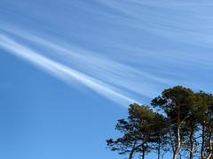 jastrzebia gora spring sky (2) (kexi) Tags: blue trees wallpaper sky cloud nature may samsung polska pines polen serene delicate simple polonia pologne 2015 instantfave polsnd jastrzebiagora wb690