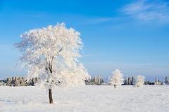 Winter Frostland (Nelepl (away)) Tags: winter snow canada ice frost hoarfrost manitoba prairies icecrystals jackfrost birdshillpark