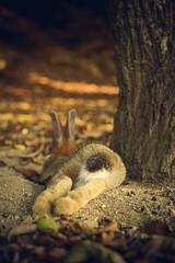 Rabbit Hole (xipevideo) Tags: rabbit japan goldenhour rabbitisland okunoshima