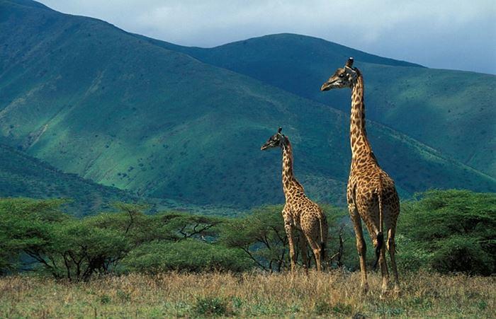 Zona-de-Conservacao-Ngorongoro-4