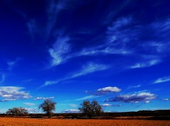 New Day... (Ph0tomas) Tags: blue trees sky newmexico clouds landscape farm socorro superaplus aplusphoto yourwonderland