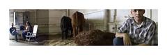 4 H Fair (DebraCrouchPhotography) Tags: digital canon cow fair farmer 4h joiner