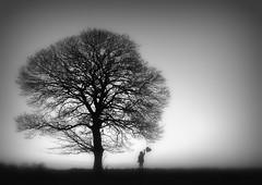 Dreamscape, Tiah II Explore (eddieELM) Tags: ireland blackandwhite irish mist tree girl monochrome fog canon mono child balloon picasa explore story sycamore tale 1740 lonetree irlanda irlande monaghan tiah canon600d eos600d rebelt3i kissx5 eddieelm